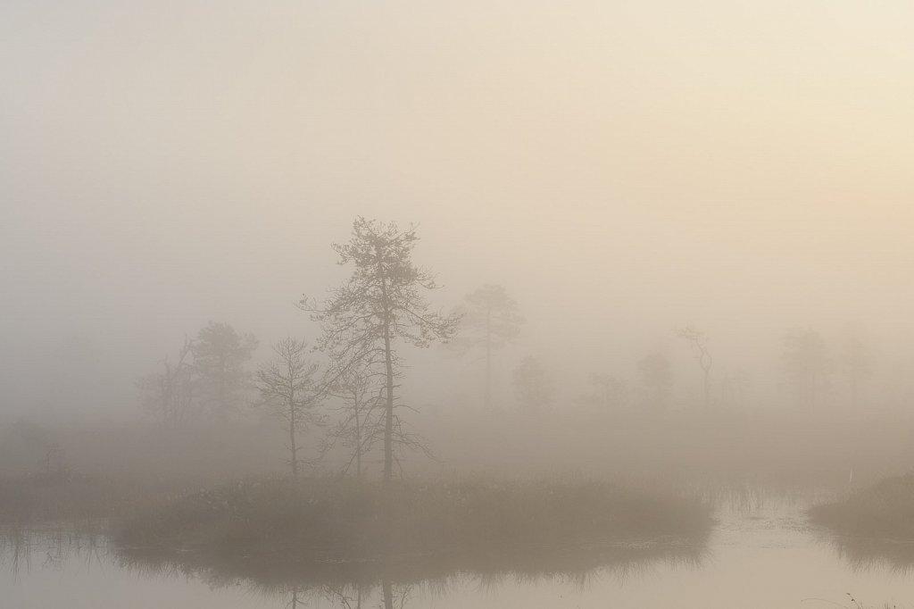 Bog in an autumn morning