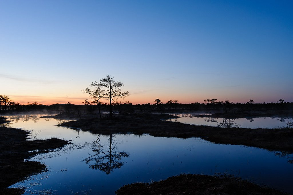 Predawn light in Kakerdaja bog